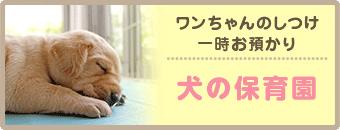 ワンちゃんのしつけ一時お預かり 犬の保育園
