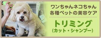 ワンちゃんネコちゃん各種ペットの美容ケア トリミング(カット・シャンプー)