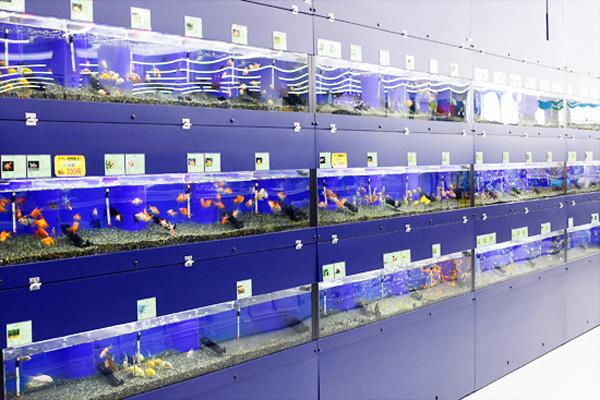 観賞魚の水槽